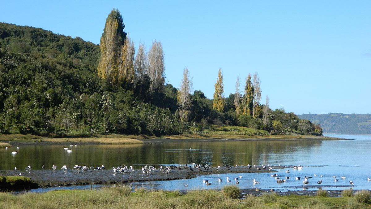 Mesa Humedales de Chiloé realiza tradicional seminario abierto a la comunidad