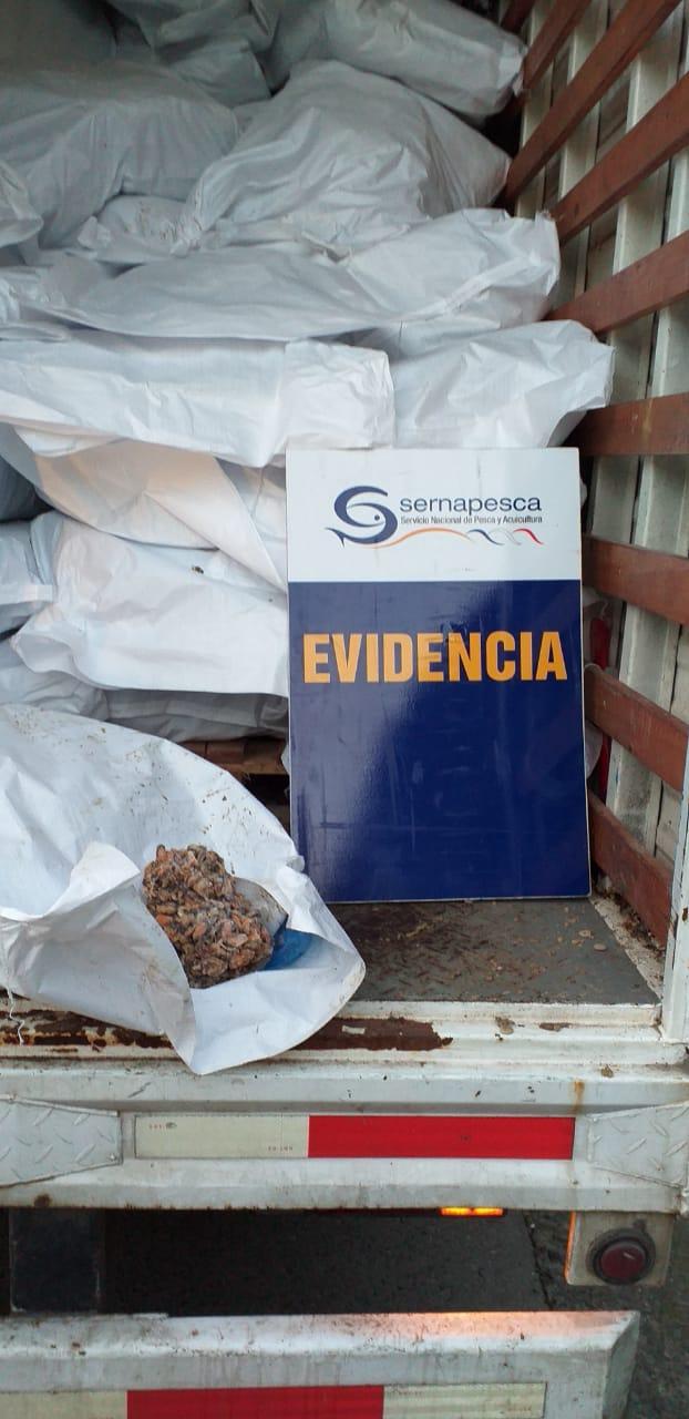 Sernapesca incauta 4 mil kilos de choritos
