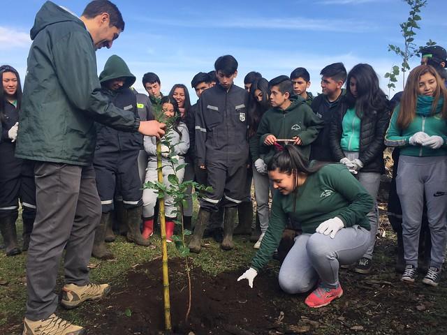 CONAF e INJUV convocan a jóvenes para realizar arborizaciones comunitarias